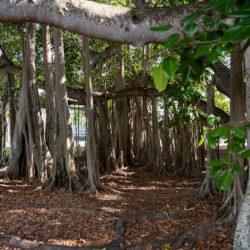 maisons d'Edison et Ford à Fort Myers