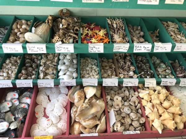 She Shells Sea Shells