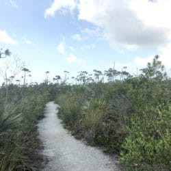 Watson Trail National Key Deer Refuge