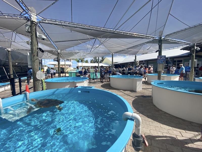 loggerhead-marinelife-center-hopital-tortues-juno-beach-17
