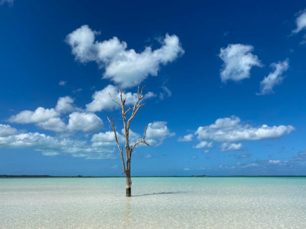 Harbour Island lone tree